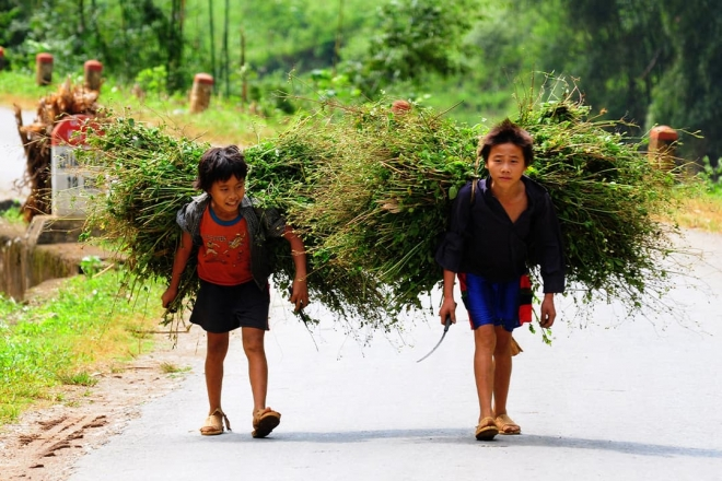 Children carrying grasses what makes evidence useful