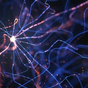 neuron pathways