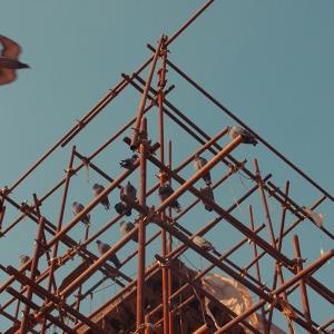 Pigeons on Scaffolding